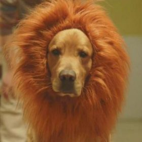 Lion Dog is Your Friend